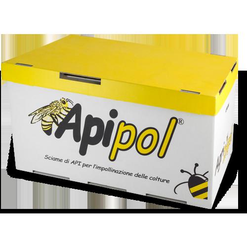 iPack & Trade - Apipol